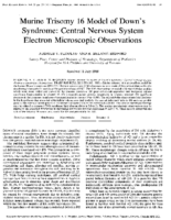 Murine trisomy 16 model of Down's syndrome: central nervous system electron microscopic observations
