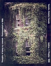 Thoughts of Being Ivy Covered